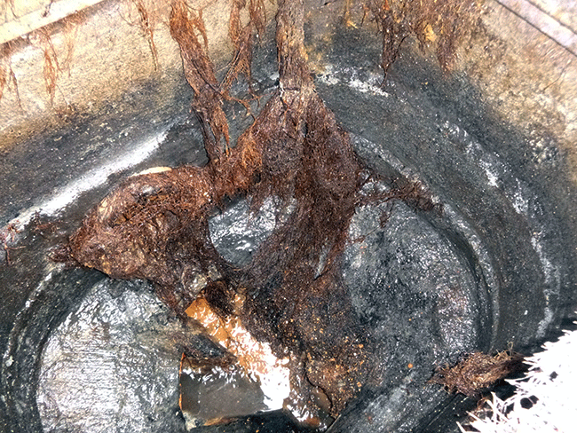 Tree Roots Blockage